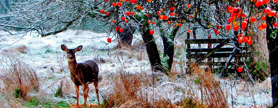 Armería La Caza os desea una Feliz Navidad y un Próspero Año Nuevo